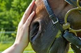 Teràpia amb cavalls 2015