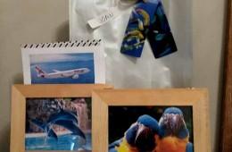 Bany amb dofins